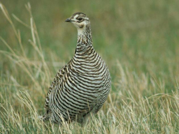 Missouri Bird Conservation Initiative