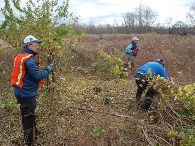 St. Louis Chapter Battles Invasive Plants